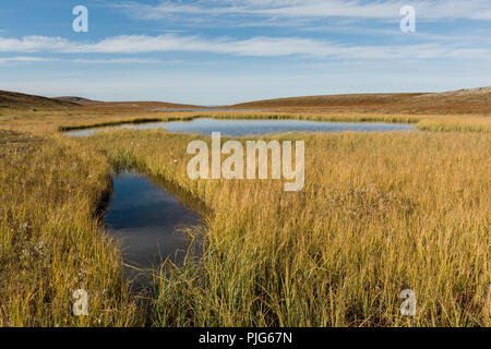 Small pond at Finnmark plateau in Finnmark, Norway, during early autumn. - Stock Image