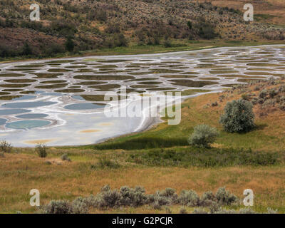 Spotted Lake is a saline endorheic alkali lake near Osoyoos, BC, Canada.  Water evaporates in summer leaving mineral - Stock Image