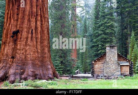 The Mariposa Grove Museum, Yosemite National Park, California, USA - Stock Image
