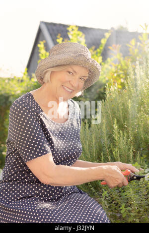 Smiling elderly lady in polka dotted dress and straw hat sitting in her garden yard cutting rosemary for her next - Stock Image
