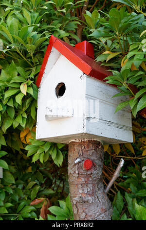 Red and white homemade wooden birdhouse surrounded by greenery, Vancouver, BC, Canada - Stock Image