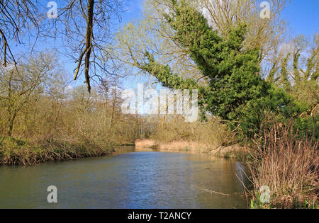 The tree fringed River Bure from the riverside footpath upstream of the village of Coltishall, Norfolk, England, United Kingdom, Europe. - Stock Image