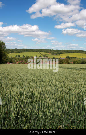 Train on the London to Manchester Main Line through the Chiltern Hills Near Cowroast and Tring, Hertfordshire, UK - Stock Image
