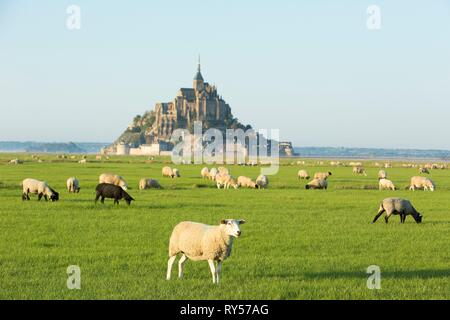 France, Manche, bay of Mont Saint Michel listed as World Heritage by UNESCO, salt meadow sheeps in front of Mont Saint Michel - Stock Image