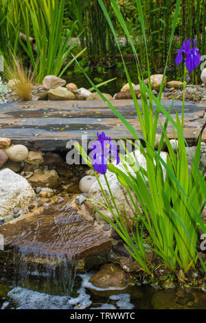 Detail from a pond in a north east Italian garden during the spring - Stock Image