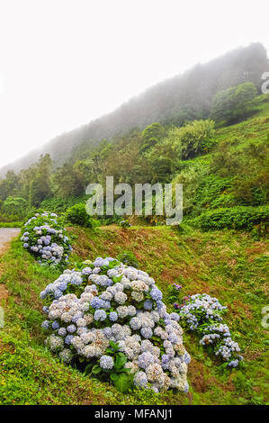 View on landscape at Azores Islands - Portugal - Stock Image