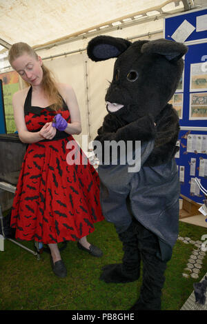 Samantha Pickering feeds a mealworm to a Brown long-eared bat (Plecotus auritus) at a public engagement event, alongside her daughter dressed as a bat, Boscastle, Cornwall, UK, October 2015. Model released. - Stock Image