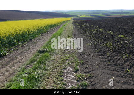 Agricultural land. Treated fields in the plane. In the foreground - blooming rape. Dirt road. - Stock Image