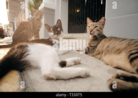 Group of Stray Cats Relaxing on Street Sidewalk At Sunset - Stock Image