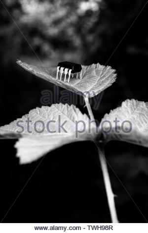 Cyborg robot insect over plant leaf - Stock Image