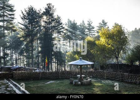 Morning light through pine trees over frosty garden in the high-altitude Phobjikha Valley in Bhutan - Stock Image