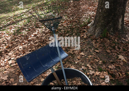 fallen leaves on large lawn with raking tools - Stock Image