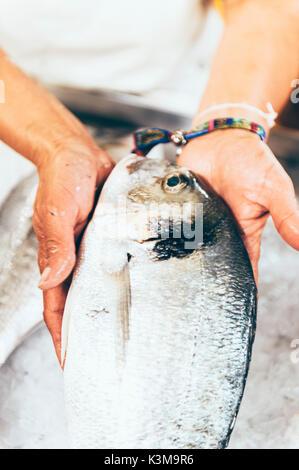 Pargo,fish,fish market - Stock Image