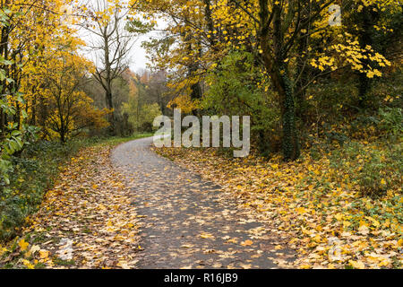 Belfast, N.Ireland, 9th November, 2018. UK Weather: Windy weather sheds more leaves from the trees on the Lagan towpath near Shaw's Bridge in South Belfast. Dry in the afternoon but heavy rain and stronger winds on the way. Credit: Ian Proctor/Alamy Live News - Stock Image