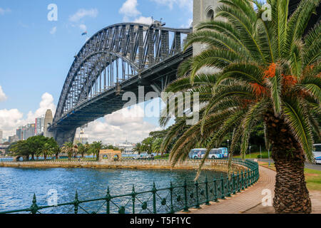 Sydney harbour bridge with palm tree and city centre office buildings,Sydney,Australia - Stock Image
