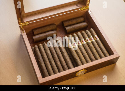A well stocked cigar humidor, with Dutch cigars - Stock Image