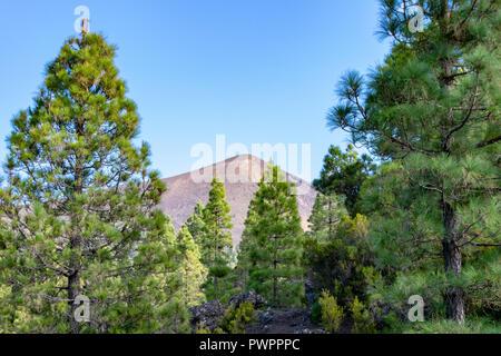 Looking through the trees to Pico Birigoyo, La Palma Island, Canaries - Stock Image