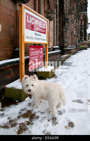 Lichfield Cathedral, Staffordshire, UK. 24th March, 2013. West Highland White Terrier,  Westie or 'Westy' - Stock Image