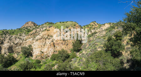 Rock hillside and cliff sloped with green and growing spring brush in California. - Stock Image