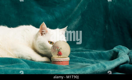 White female cat is lying on a cyan blanket, lurking behind a crystal snowball. She has got her eye on a mouse inside - Stock Image
