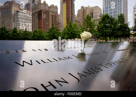A white rose placed in a name on the 911 memorial garden, New York, NY, USA, United States of America. - Stock Image