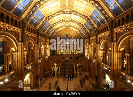 Atrium of the National History Museum in London. - Stock Image