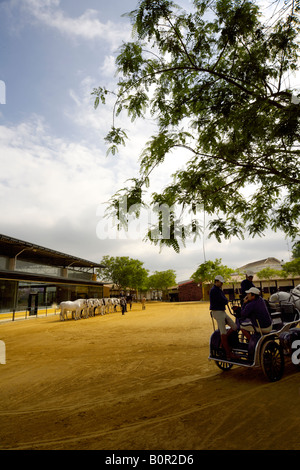 fine Spanish thoroughbred Carthusian horses and carriage at Yeguada de la Cartuja stud, Jerez de la Frontera, Andalucia, - Stock Image