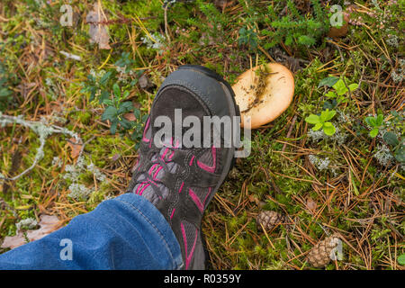 Stepping up in Russula mushroom while walking through the forest - Stock Image