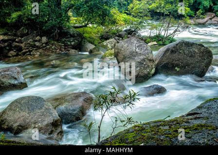 Mossman Gorge, Tropical North Queensland - Stock Image