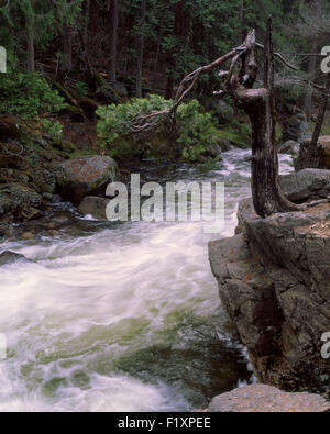 Mountain Stream - Stock Image
