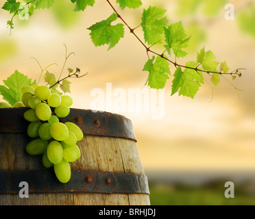 Ripe grape and old barrel border in vineyard - Stock Image