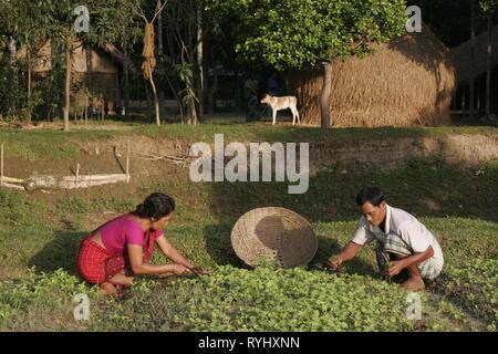 BANGLADESH Alpona Ritchil and husband Farid Pathang of the Garo tribal minority weeding their vegetable garden, Haluaghat, Mymensingh region photo by Sean Sprague - Stock Image