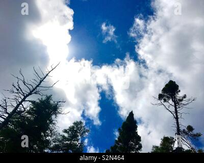 Trees and clouds - Stock Image