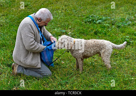 Dog owner searching for a compensation for his truffle dog of the Lagotti Romagnolo breed during a presentation, Bonvillars truffle market,Switzerland - Stock Image