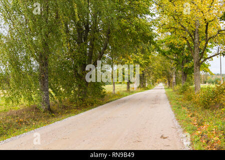 Country road with a treeline on both sides - Stock Image