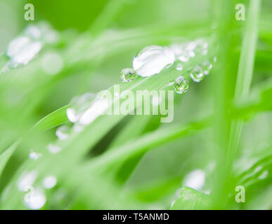Raindrops on grass blades after rain in a forest in Madeira, Portugal - Stock Image