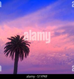 Sunset with palm tree - Stock Image