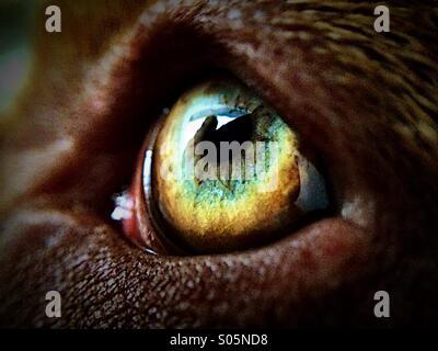 Dogs eye - Stock Image