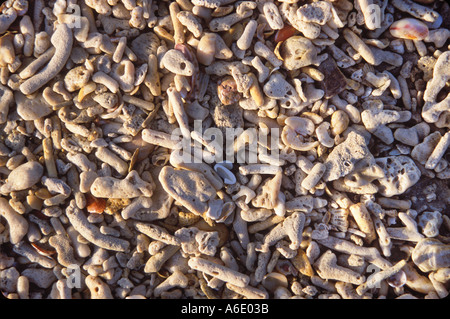 Shells on beach in Thailand - Stock Image