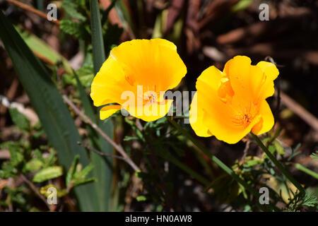 yellow flowers - Stock Image