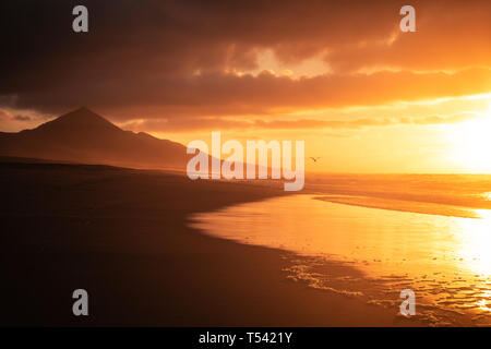 Golden beautiful red sunset at the beach with seagull flying for freedom and vacation concept - nobody in tropical wild scenic place with ocean and mo - Stock Image