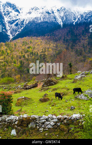 Landscape View Mountains Hiking Himalayas.Beautiful End Summer Season Background.Vertical Photo.Green Threes Cloudy - Stock Image