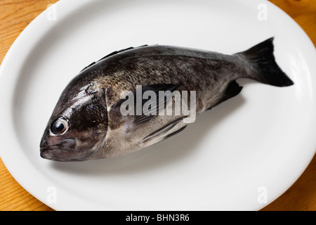 Fresh blue rockfish on a white plate - Stock Image