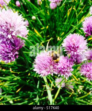 Flight of the bumble bee. - Stock Image