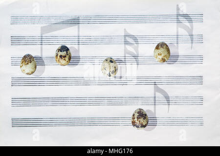 Japanese quail eggs in front of a blank six-stave music paper are casting shadows in the shape of musical notes. - Stock Image