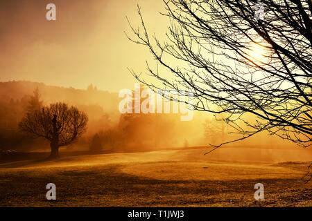 A misty morning in. Glebe park,Bowness on Windermere,Lake District,Cumbria,England,UK - Stock Image