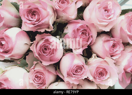 Beautiful retro soft pink rose flower background. Image shot from top view. - Stock Image