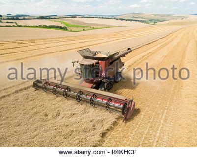 Harvest aerial overhead of combine harvester cutting summer wheat field crop on farm - Stock Image