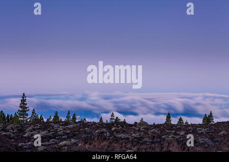 Pre dawn above the clouds on a full moon night looking west over the clouds with the lights from La gomera twinkling, from the Las Canadas del Teide n - Stock Image