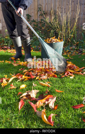 Man collecting fallen leaves in autumn. - Stock Image